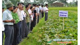 Công Ty TNHH Hạt Giống Tân Lộc Phát