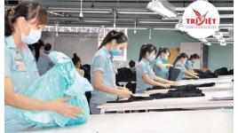Công Ty TNHH Thương Mại Và Dịch Vụ Nhân Lực Trí Việt