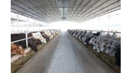 Công ty Cổ phần Phát triển Chăn nuôi Hòa Phát
