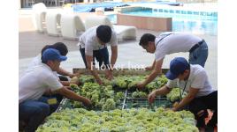 Công ty TNHH Thuận Lê
