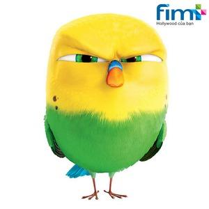 Công ty Cổ phần Fim Plus