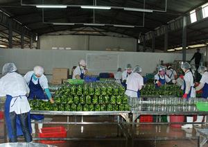 Công ty Cổ phẩn Thực phẩm Á Châu