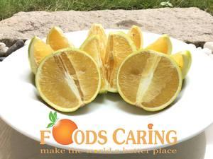 Công ty Cổ phần Foods Caring